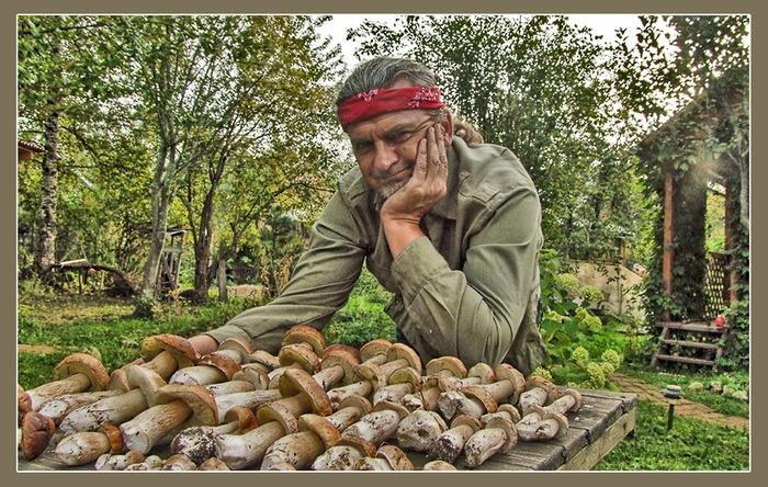 справочник грибов подмосковья с фото
